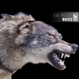 D.M. Project - Wolves - Node 6 Records - 07:06 - 21.10.2019